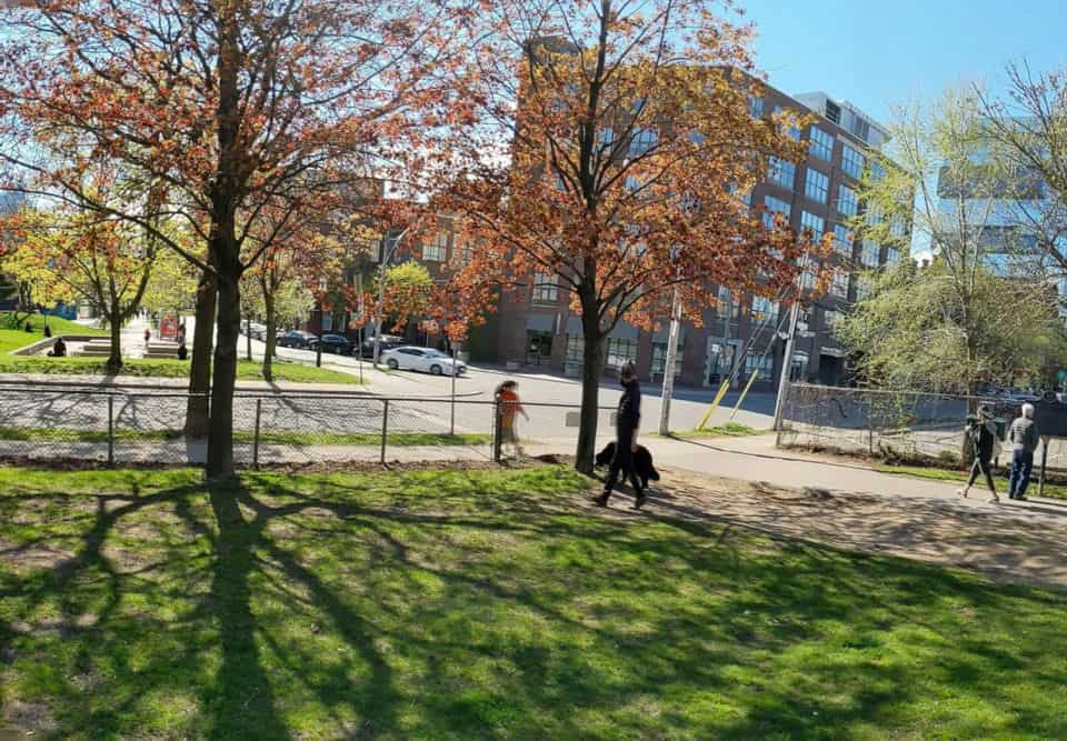 people walking dogs at a park near distillery district