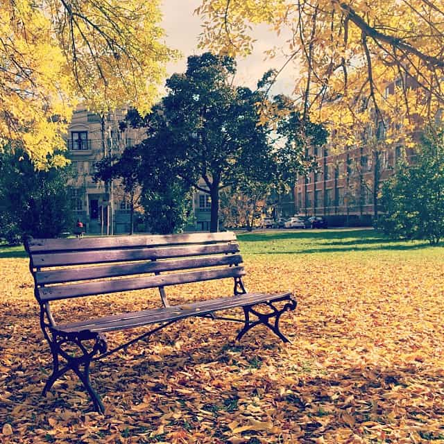 trinity bellwoods park bench with autumn leaves
